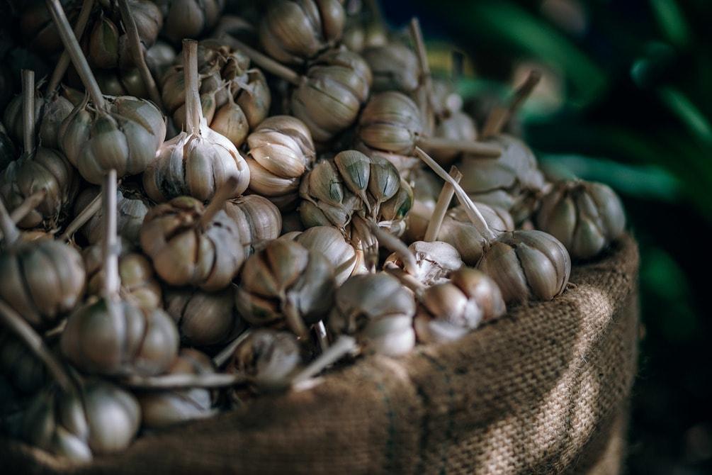 Close-up shot of a pile of garlic in a big bag