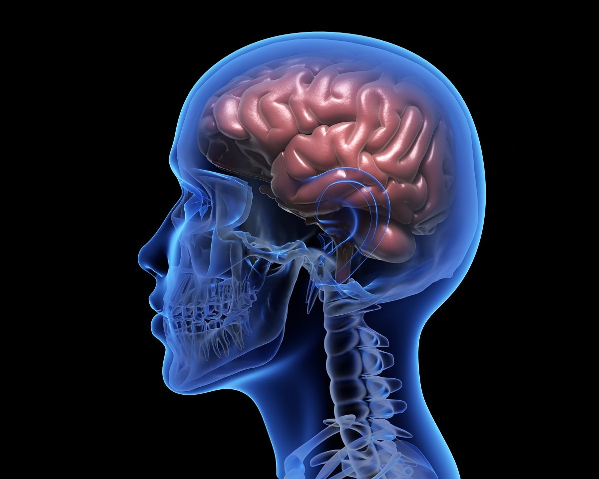 human-brain diagram