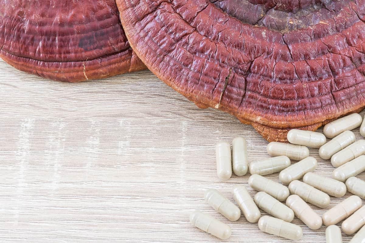 ling zhi mushroom or ganoderma